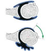 Fig. 1 : rotation de la tête humérale